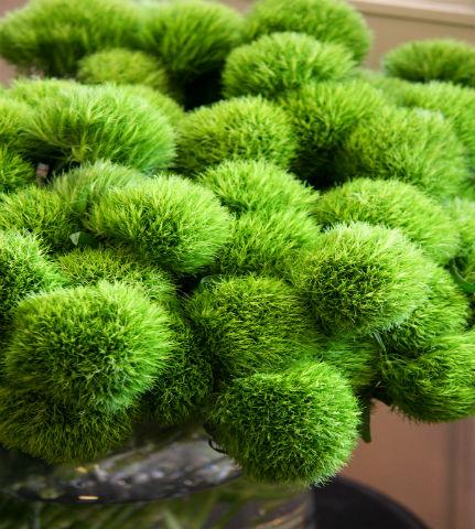 Chr Code Green (verde) M05